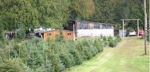 Feste più verdi con un albero ecologico
