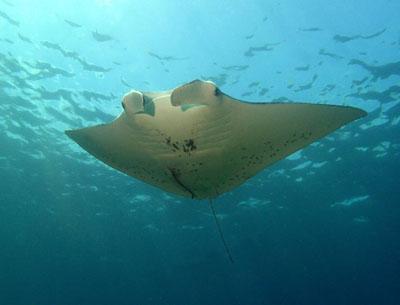Una vacanza da archeologi, biologi marini e registi: ecco dove