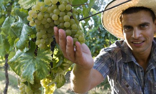 L'agricoltura che piace ai giovani e crea lavoro