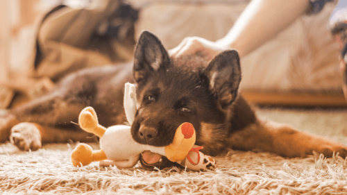 Animali domestici sani e felici risparmiando