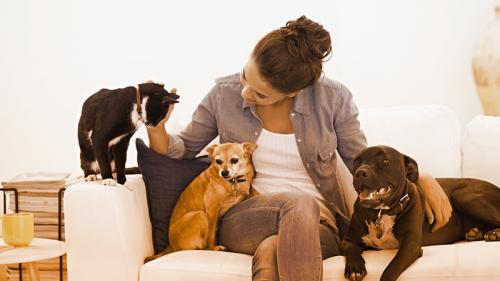 Trovare pet sitter con le app, risparmiando