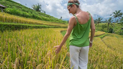 Costruire con il riso: l'idea della startup italiana Ricehouse