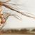 Sette emozioni capitali per le nostre finanze