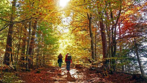I boschi italiani più belli per le vostre escursioni autunnali