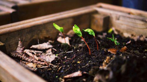 10 consigli per prenderti cura delle tue piante in casa