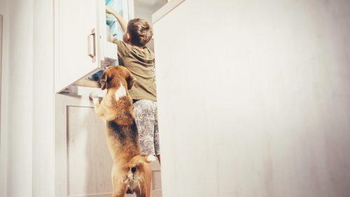 Come avere cura del tuo frigorifero
