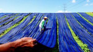 Green deal: investimenti per far fronte alla crisi climatica ed economica