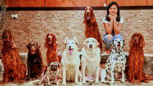 La gioia di adottare un cane anziano