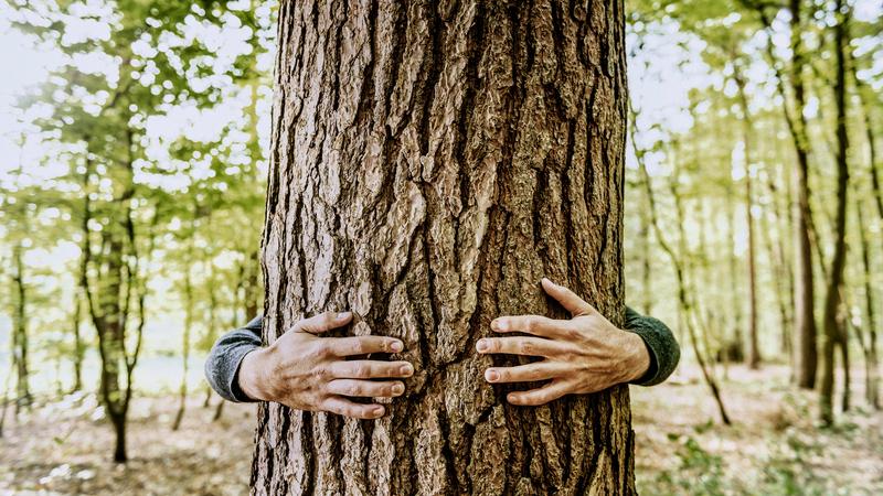 Adotta un albero a distanza