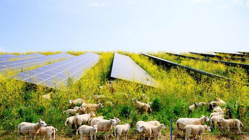 Fondi sostenibili buoni per te e per l'ambiente